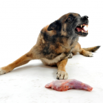 Is food aggression in a dog acceptable?