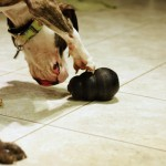 Why your dog gets more bored with some toys than others
