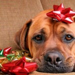 Dogs get stressed during the holidays and here are ways to prevent it