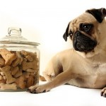 Is food sensitivity and food allergy in dogs the same thing?