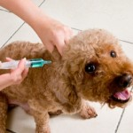 Vaccinations: A word of caution for our animals and why titer tests are a better option