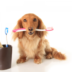 Your dog's dental hygiene determines his overall health