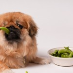 Why giving your pooch too many veggies is not healthy