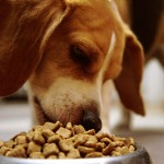 """Truth & Lies Exposed – Watch the Full Documentary """"Pet Food: A Dog's Breakfast"""""""