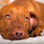 Ask a holistic vet: Dogs with diabetes