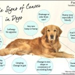 Would you ever expect this would be the cause of cancer in your dog?