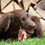 Learn how to feed your dog raw food diet