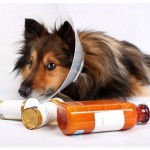 Epidemic of medicated dogs calling into question sanity of their owners