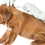 Planning To Microchip Your Dog? Implanted Microchips Cause Cancer