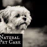 You can fight fleas and ticks with common household products