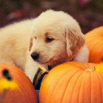 Pumpkin is the miracle food for your pets!
