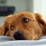 The 3 Most Common and Preventable Canine Ailments