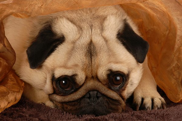 What you need to know about depression in pets