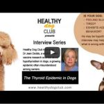 The Thyroid Epidemic in Dogs you may want to know about