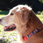 Exercise your senior pup in moderation