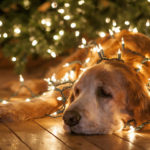 How to keep your dog feeling jolly even during the chaos of the season