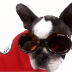 Doggles eye glasses help your dog regain eye sight