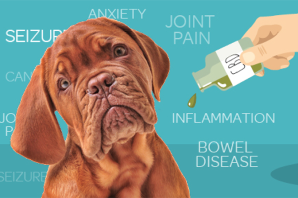 What you need to know about CBD oil and how it can help your ailing pooch